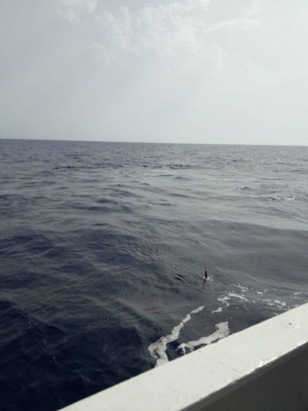 Perfilador a la deriva